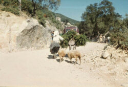 1630648_corfu-kerkira-greece_-17-
